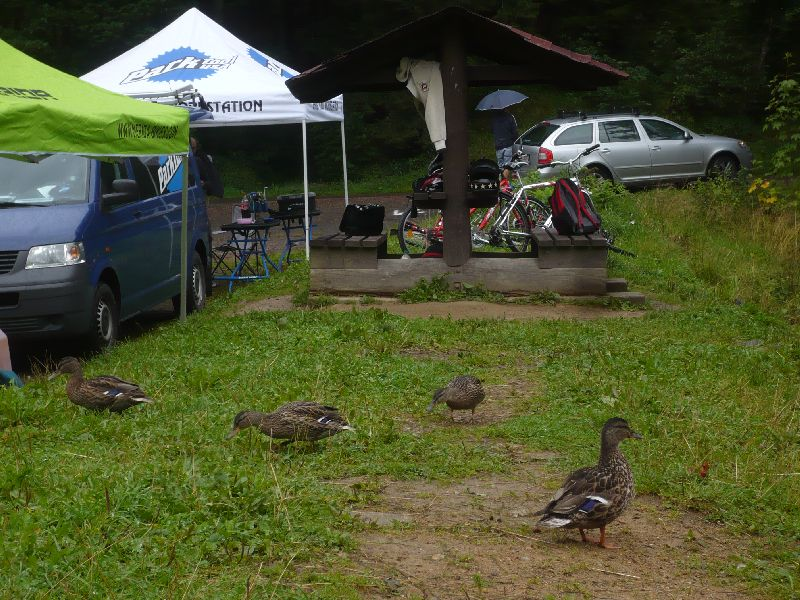 Ducks on grass next to bicycle repair pop up tents