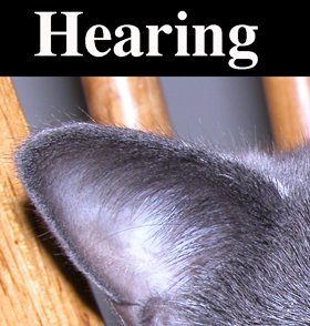 "Cat ear with ""hearing"" above"